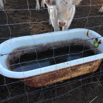 tub_cow trough